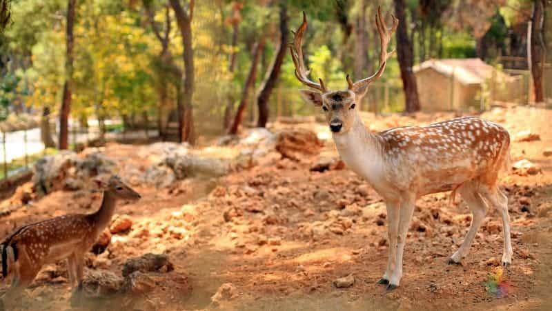 antalya hayvanat bahçesi Antalya'da gezilmesi gereken yerler